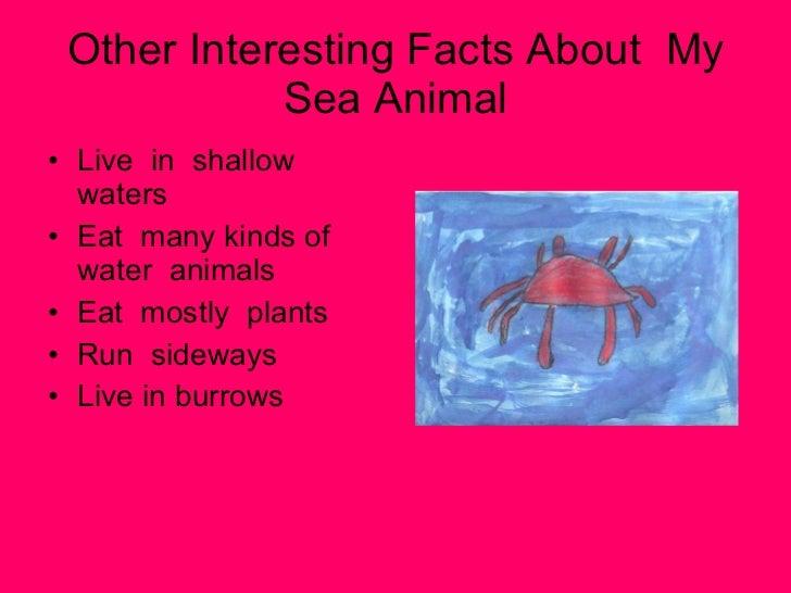 Mrs Anthony Grade 2 Sea Animals