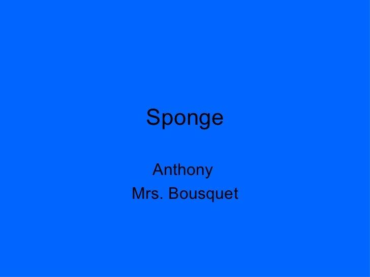 Sponge Anthony  Mrs. Bousquet