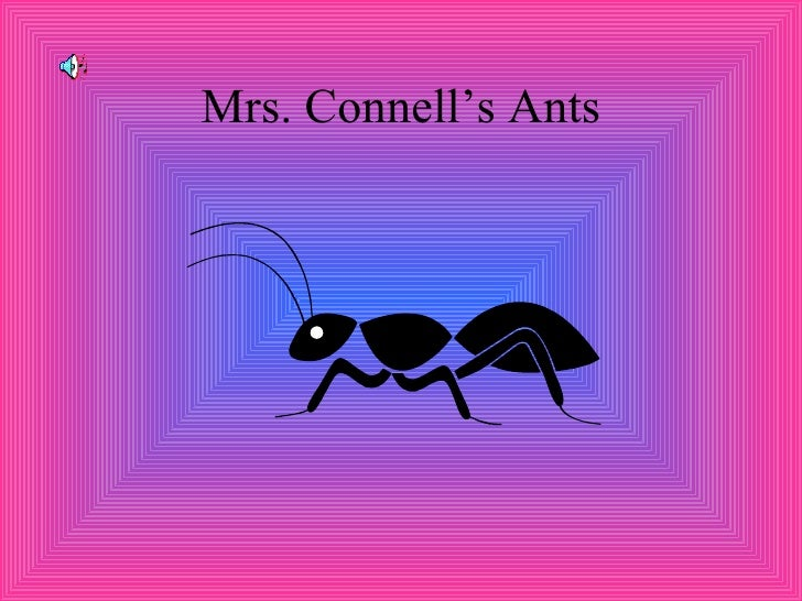 Mrs. Connell's Ants