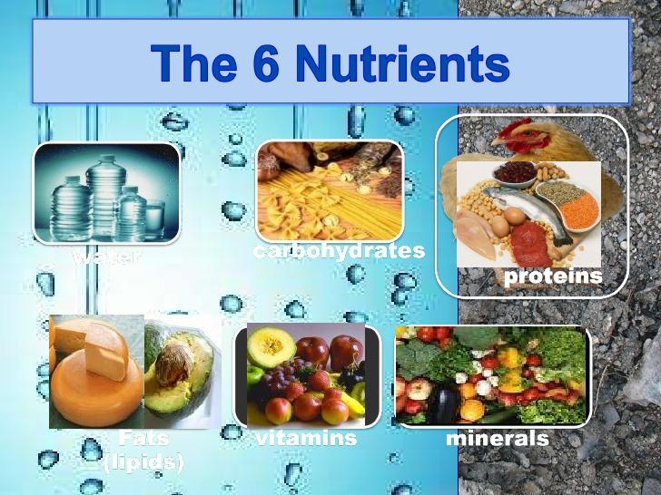 Six Major Nutrients In Dog Food