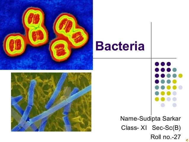 Bacteria Name-Sudipta Sarkar Class- XI Sec-Sc(B) Roll no.-27