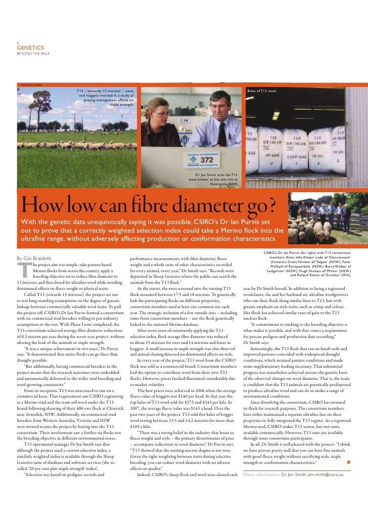 6 GENETICS BEYOND THE BALE         PHOTOS: CSIRO                                    T13 – 'towards 13 microns' – ewes     ...