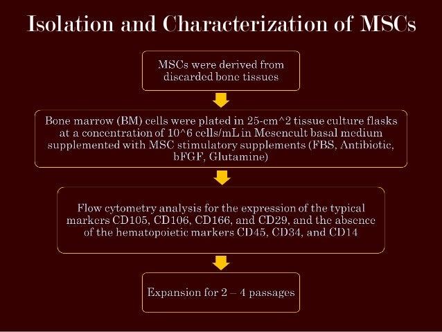 Immunomodulatory Properties Of Mesenchymal Stem Cells
