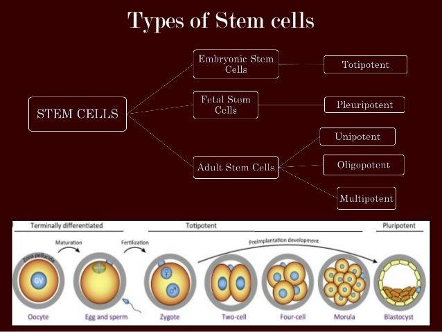 hematopoietic stem cell self-renewal versus differentiation pdf