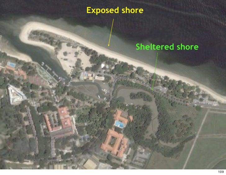Singapore, shore   Exposed c.1990                Sheltered shore                                   109