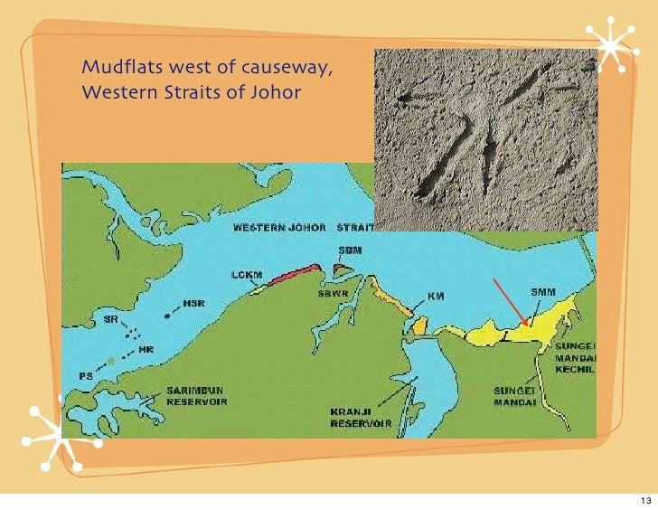 Mudflats west of causeway, Western Straits of Johor                                 13