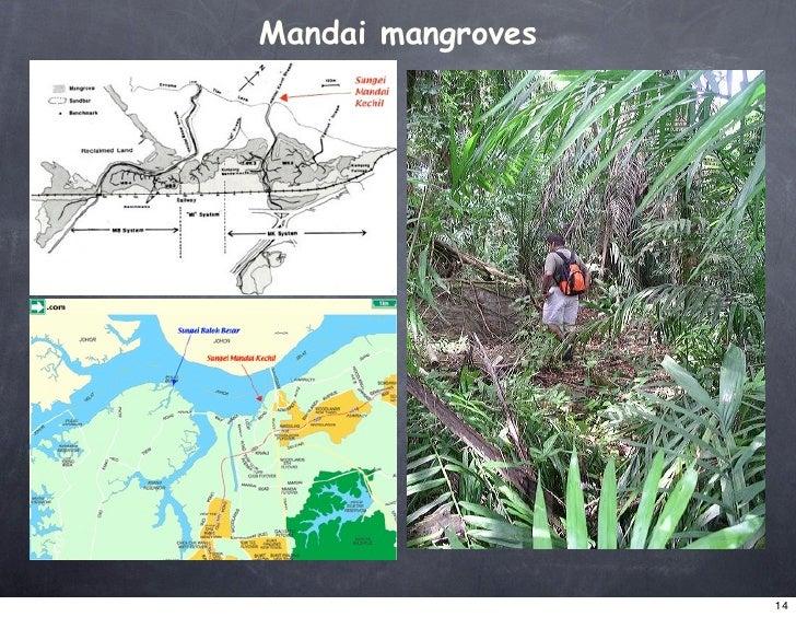 Mandai mangroves                        14