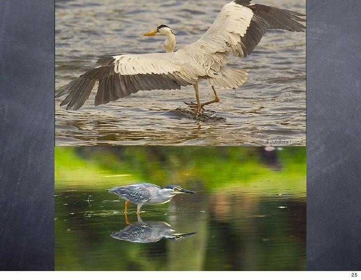 Ponds or birds?                   25