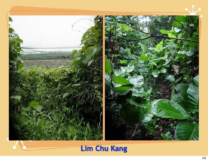 Lim Chu Kang                68