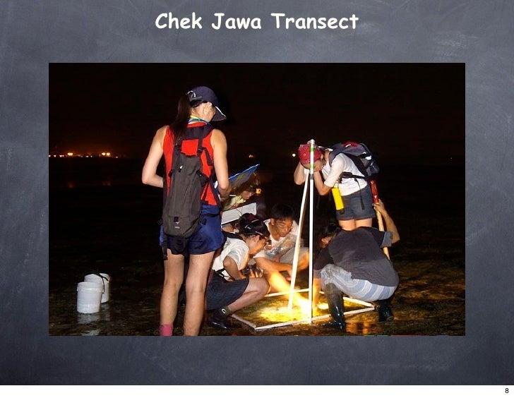Chek Jawa Transect                          8