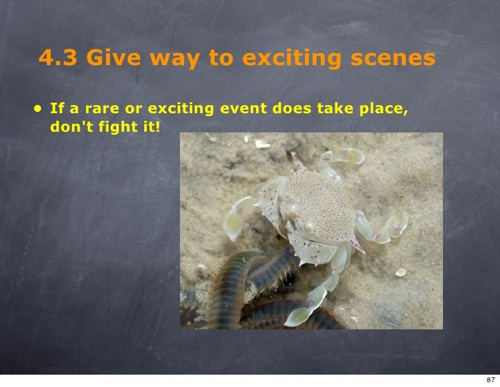 4.3 Give way to exciting scenes  • If a rare or exciting event does take place,   don't fight it!                         ...