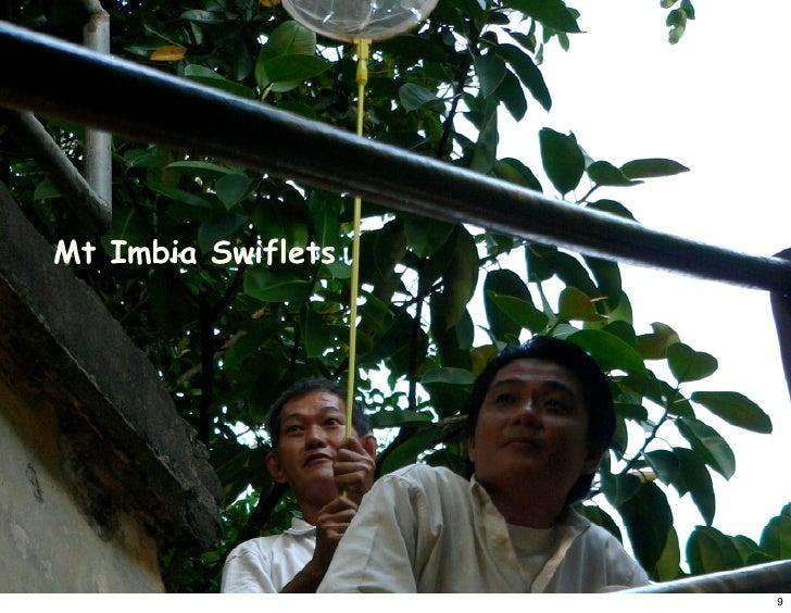 Mt Imbia Swiflets                         9