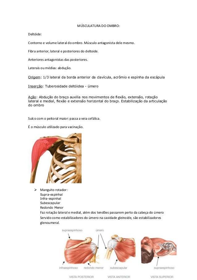 MÚSCULATURA DO OMBRO: Deltóide: Contorno e volume lateral do ombro. Músculo antagonista dele mesmo. Fibra anterior, latera...