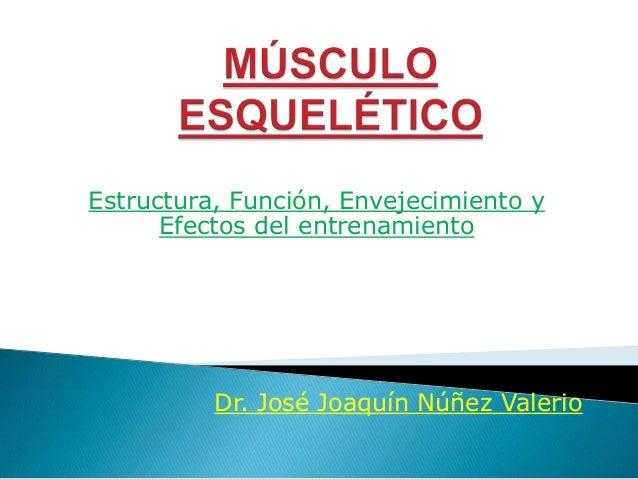 Estructura, Función, Envejecimiento y Efectos del entrenamiento  Dr. José Joaquín Núñez Valerio