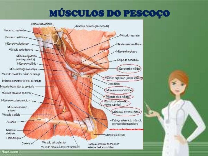 Magnífico Anatomía Músculo Esternocleidomastoideo Modelo - Anatomía ...