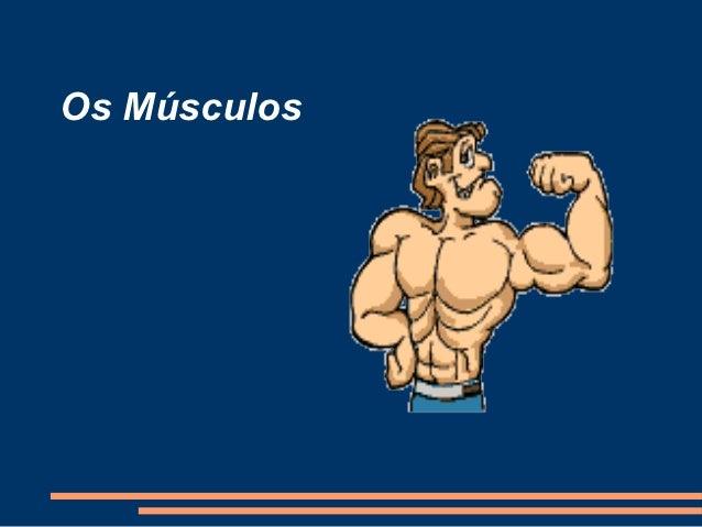 Os Músculos