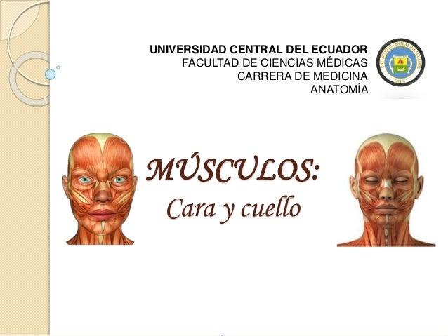 MÚSCULOS: Cara y cuello UNIVERSIDAD CENTRAL DEL ECUADOR FACULTAD DE CIENCIAS MÉDICAS CARRERA DE MEDICINA ANATOMÍA