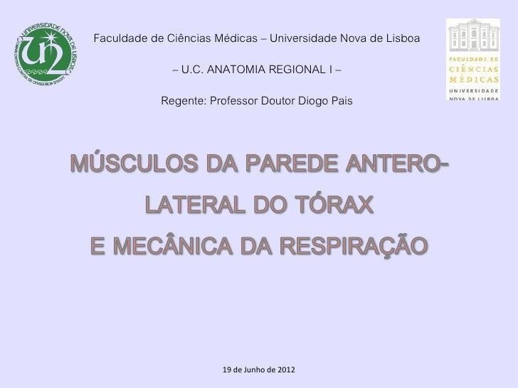 Faculdade de Ciências Médicas – Universidade Nova de Lisboa              – U.C. ANATOMIA REGIONAL I –            Regente: ...
