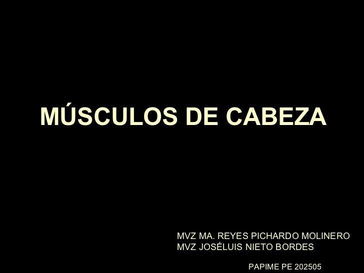 MÚSCULOS DE CABEZA MVZ MA. REYES PICHARDO MOLINERO MVZ JOSÉLUIS NIETO BORDES PAPIME PE 202505