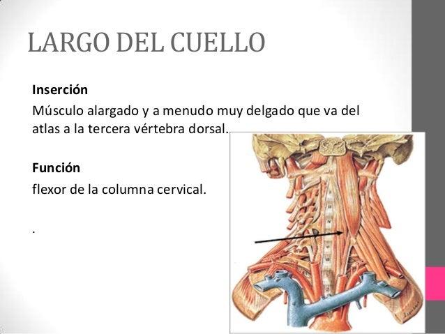 Como distinguir el dolor renal del dolor en la espalda