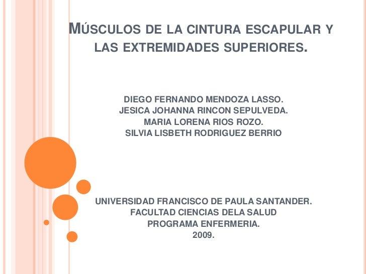 Músculos de la cintura escapular y las extremidades superiores.<br />DIEGO FERNANDO MENDOZA LASSO.<br />JESICA JOHANNA RIN...