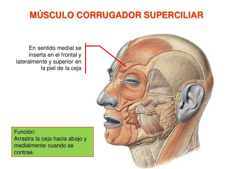 Porción nasal del hueso frontal