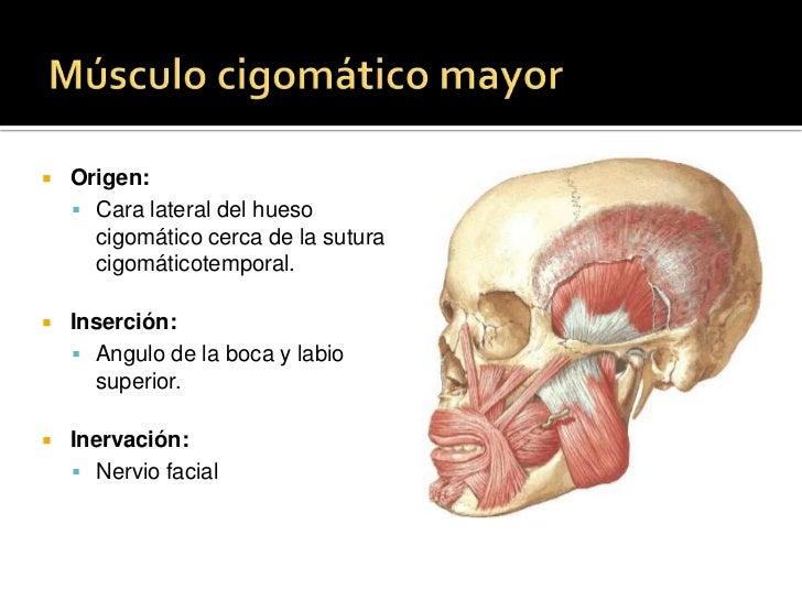 Eminencia alveolar del incisivo medial