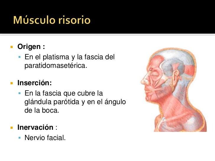 Descenso del tabique nasal</li></ul>Pa<br />