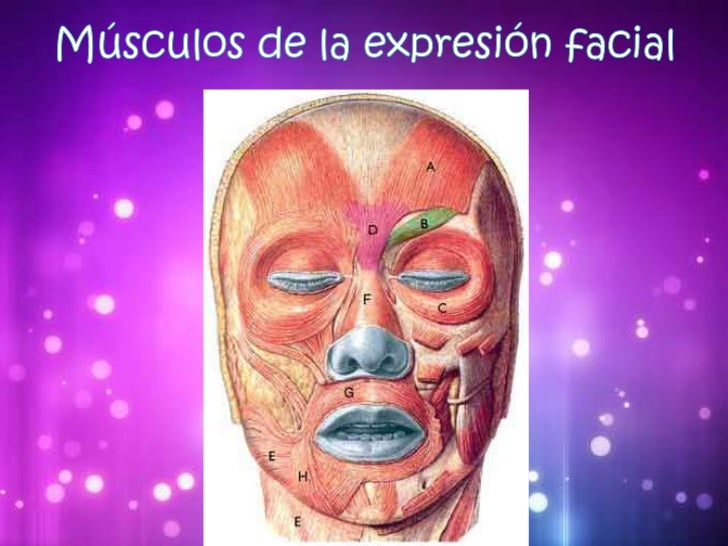Los músculos facialesTienen tres características comunes  principales:• Una inserción móvil cutánea.• Están inervados por ...