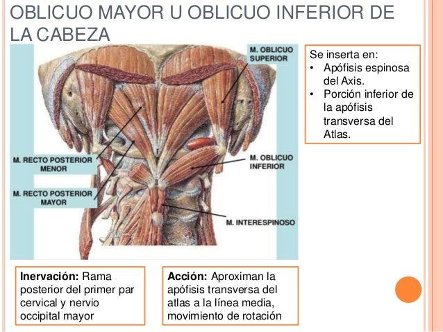 Del masaje a la hernia de la hernia intervertebral