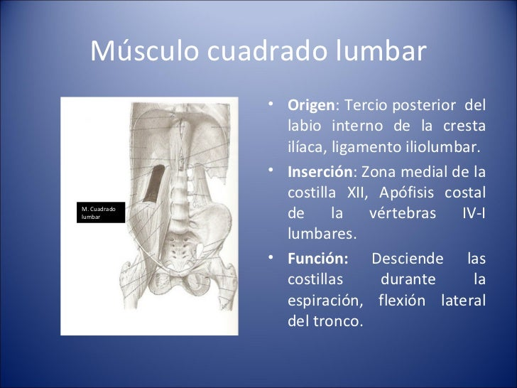 Músculo cuadrado lumbar <ul><li>Origen : Tercio posterior  del labio interno de la cresta ilíaca, ligamento iliolumbar. </...