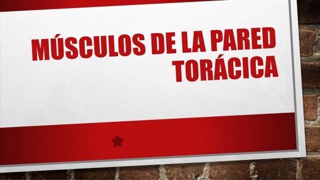 SERRATO POSTERIOR SUPERIOR  • O.- LIGAMENTO NUCAL. PROCESOS ESPINOSOS DE LAS  VÉRTEBRAS C7 A T3  • I.- BORDES SUPERIORES D...