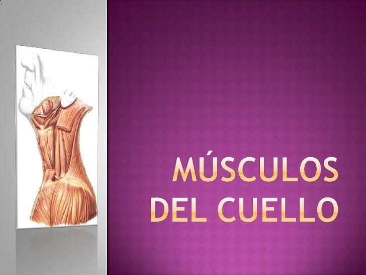 Músculos del cuello<br />