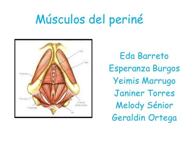 Músculos del periné Eda Barreto Esperanza Burgos Yeimis Marrugo Janiner Torres Melody Sénior Geraldin Ortega