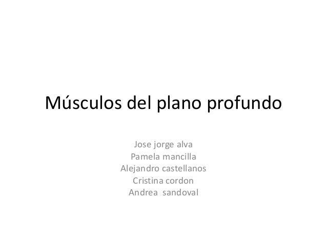 Músculos del plano profundo Jose jorge alva Pamela mancilla Alejandro castellanos Cristina cordon Andrea sandoval