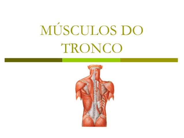MÚSCULOS DO  TRONCO
