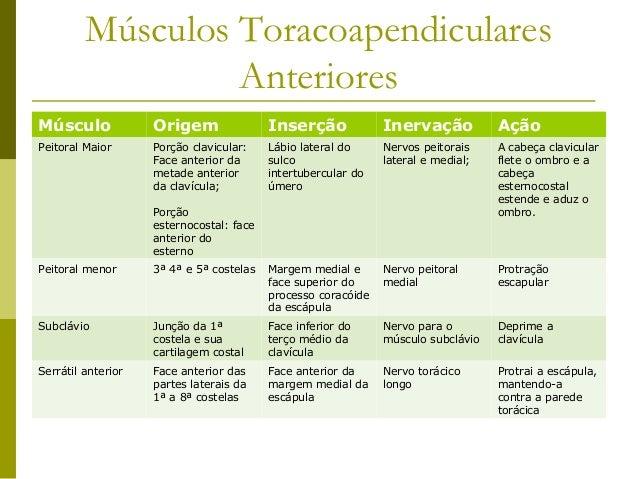 Músculos Toracoapendiculares                  AnterioresMúsculo             Origem                Inserção             Ine...