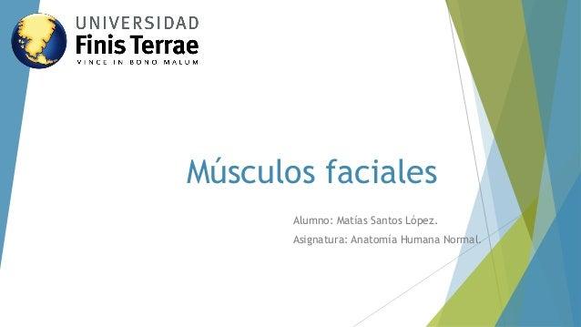 Músculos faciales  Alumno: Matías Santos López.  Asignatura: Anatomía Humana Normal.