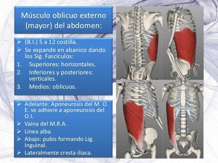 Músculos, fascias y aponeurosis del abdomen