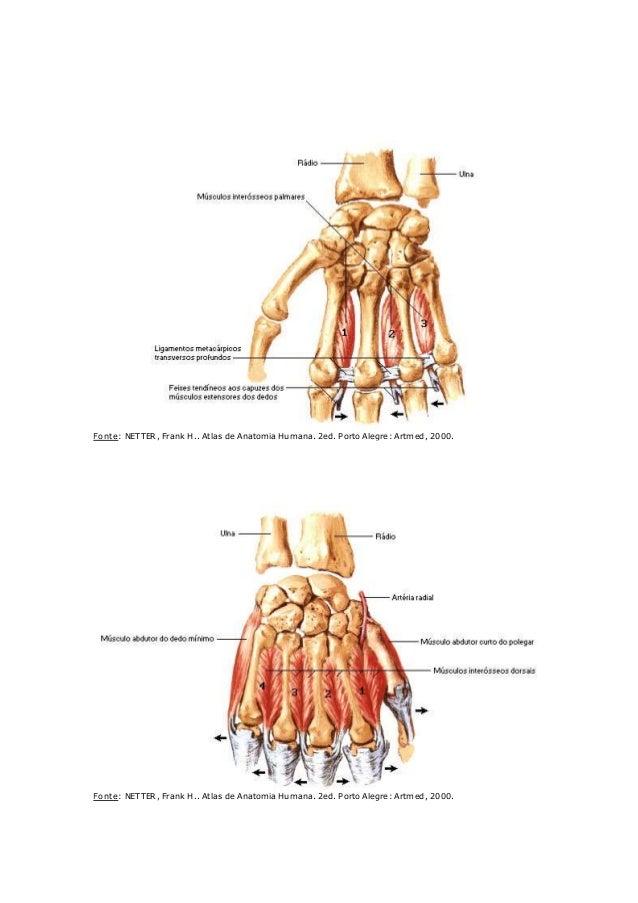 Músculos mao
