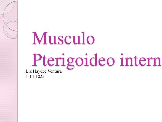 Musculo Pterigoideo internoLiz Haydee Ventura 1-14-1025
