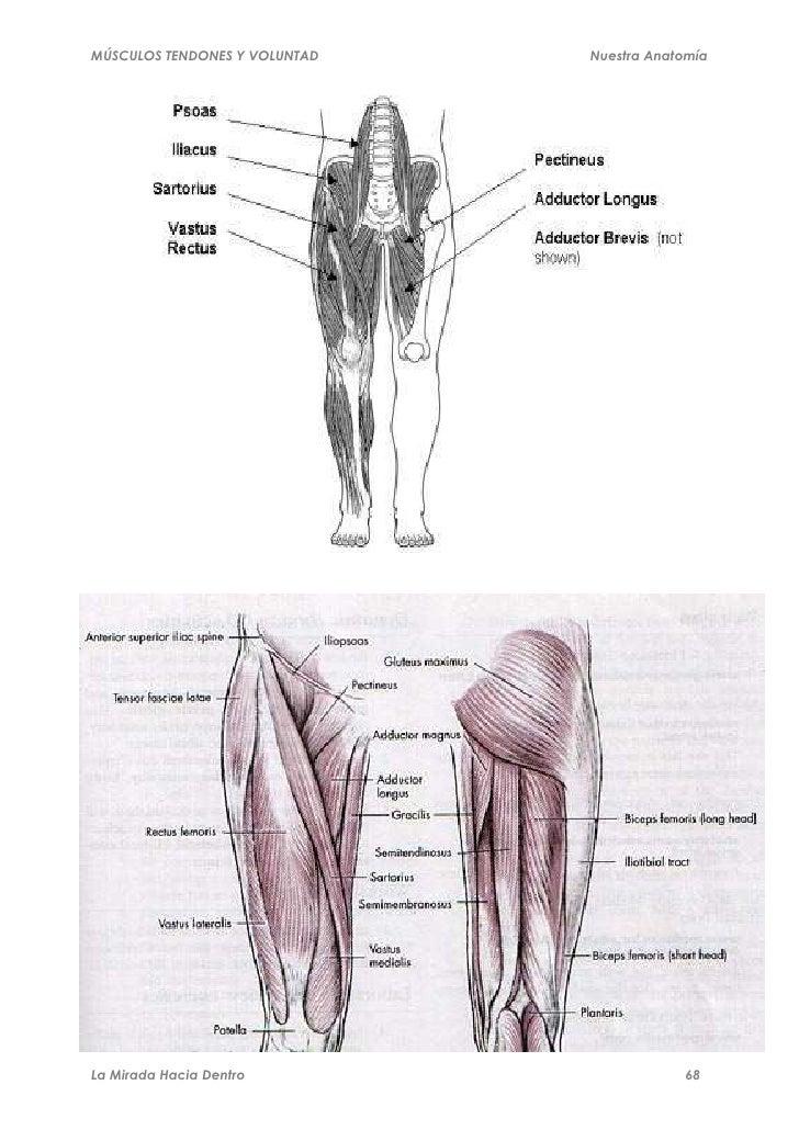 Hermosa Hombro Músculos Y Tendones Diagrama Friso - Anatomía de Las ...