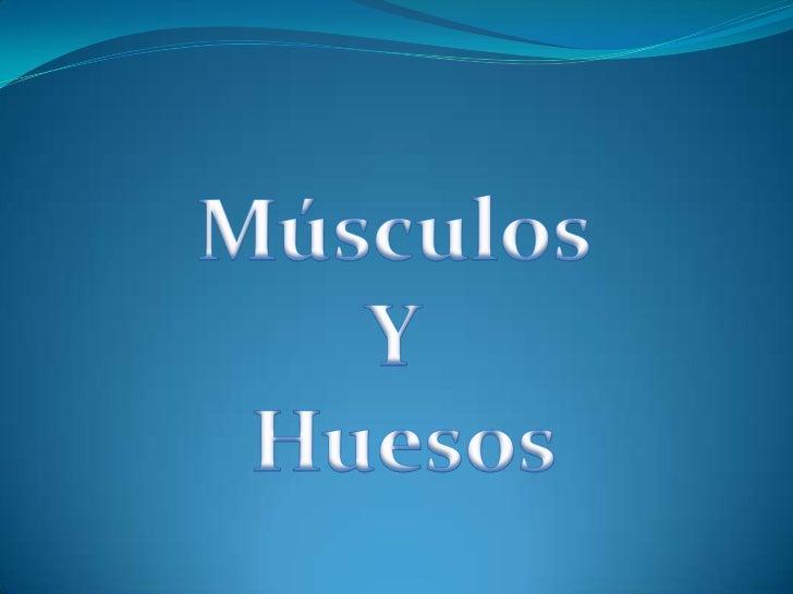 Músculos <br />Y<br /> Huesos<br />