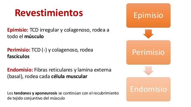 diferencia entre musculo natural vs esteroides