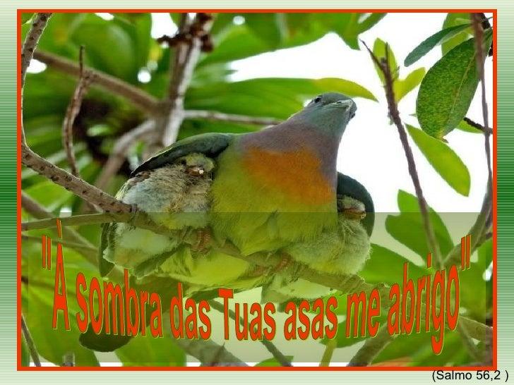 """""""À sombra das Tuas asas me abrigo""""  (Salmo 56,2 )"""