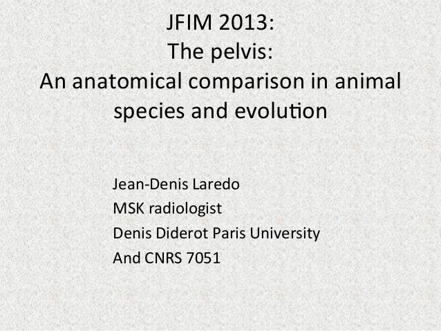 JFIM	   2013:	    The	   pelvis:	    An	   anatomical	   comparison	   in	   animal	    species	   and	   evolu=on	    	  ...