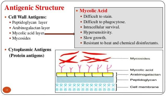 Mycobacterium Tuberculosis Antigenic Structure
