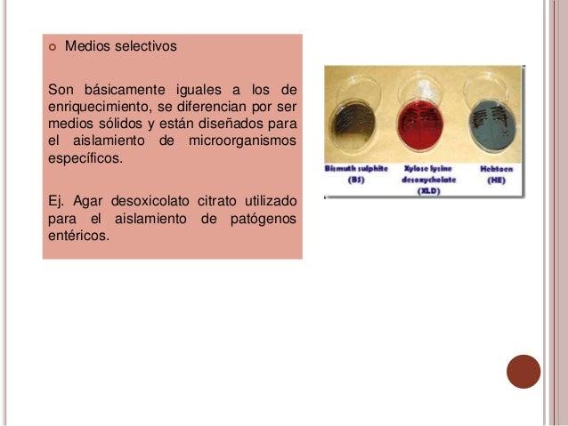    Medios selectivosSon básicamente iguales a los deenriquecimiento, se diferencian por sermedios sólidos y están diseñad...
