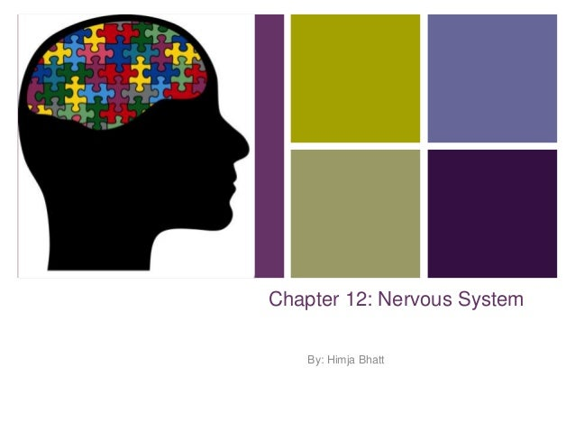 + Chapter 12: Nervous System By: Himja Bhatt