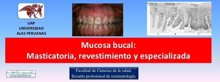 UAP UNIVERSIDADALAS PERUANAS                   Mucosa bucal:    Masticatoria, revestimiento y especializada               ...